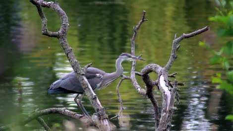 Heron-on-Branch