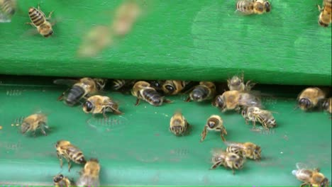 Beehive-Entrance