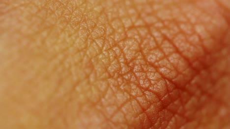 Human-Skin-Close-Up