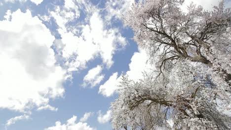 Japanese-Tree-2
