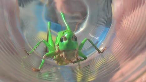 Grasshopper-in-Glass