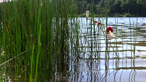 Summertime-Lake-and-Reeds-2