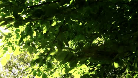 Green-Leaves-Lens-Flare