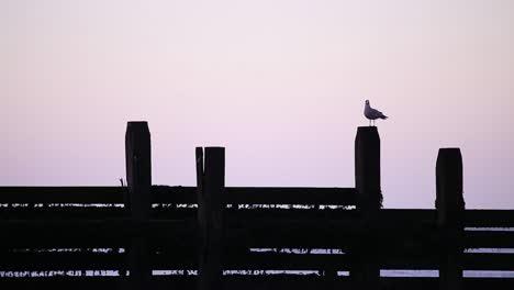 Seagull-at-Dusk