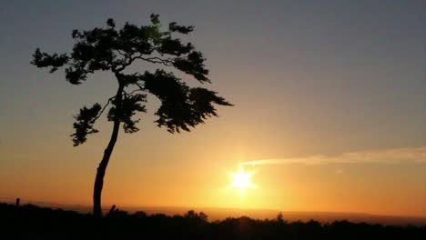 Lonely-Tree-at-Sunset-(slow-motion)-CC-BY-NatureClip