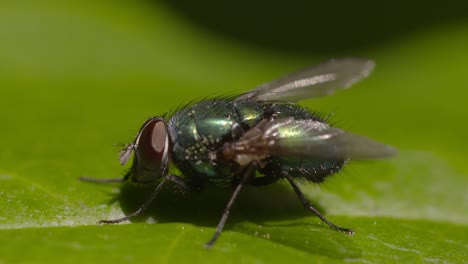 Fly-on-Leaf
