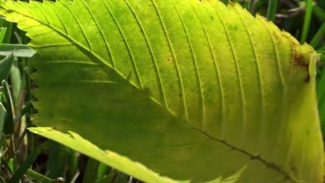 Macro-Shot-of-Leaf-Blowing-in-Wind-3