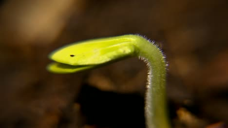 Macro-Seedling-Time-Lapse-CC-BY-NatureClip