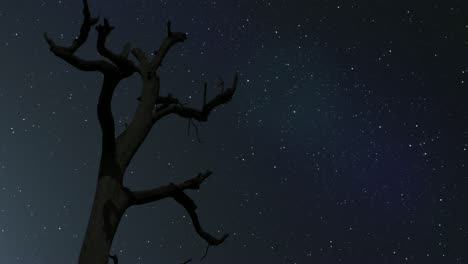 Milky-Way-with-Tree