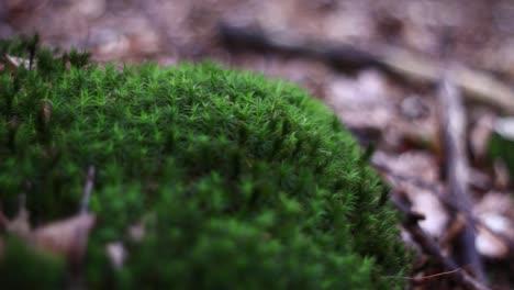 Macro-Moss