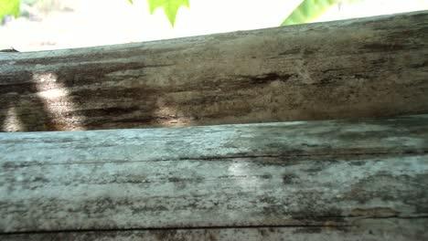 Ants-walking-on-branch