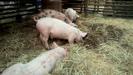 Pig-Digging