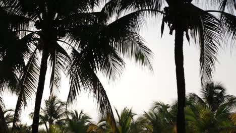 Silhouetted-Palm-Trees-on-Mexican-Beach