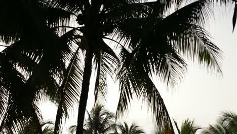 Palm-Tree-Silhouettes-