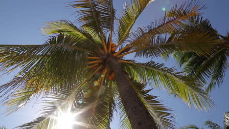 Palm-Trees-in-Mexico