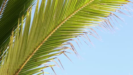 Palm-Tree-Leaves-Close-Up