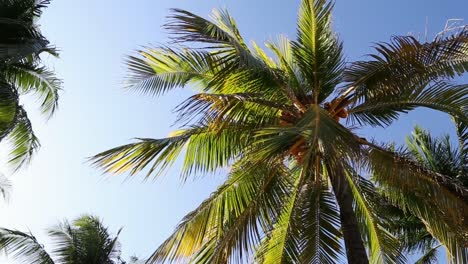 Palm-Trees-in-the-Breeze-