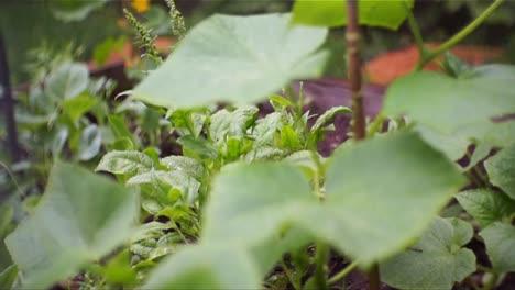 Plants-in-the-Rain