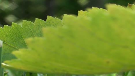 Pull-Focus-Leaf-in-Grass