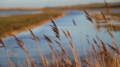 Reeds-and-Marshland-1