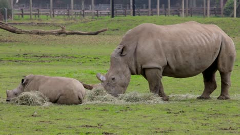 Rhino-Mother-and-Child-