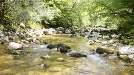 River-in-Forest