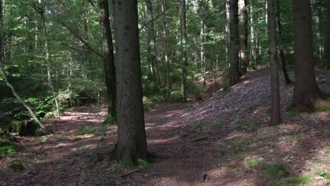 Forest-Steadycam-Shot