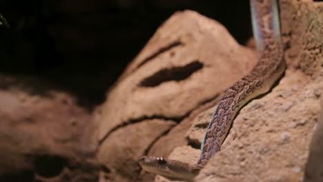 Snake-Basking