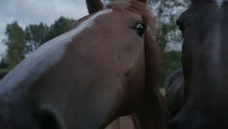 Horses-Up-Close