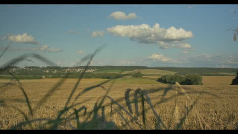 Fields-and-City-