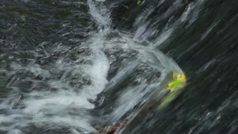 Waterfall-Interrupted-by-a-Leaf-(closeup)
