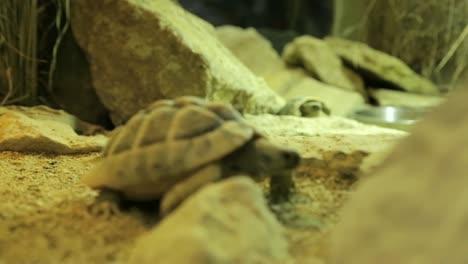 Tortoise-Pair-Exploring
