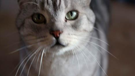 Silver-Cat-Handheld-1