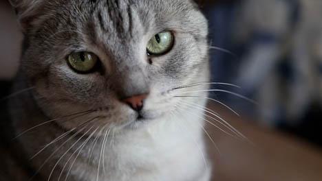 Silver-Cat-Handheld-2