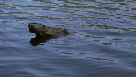 Slow-motion-of-Log-in-Water