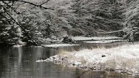 Beautiful-Snow-Scene