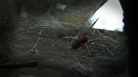Spider-Surprise-