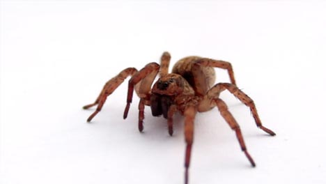 Spider-in-Slow-Motion-CC-BY-NatureClip