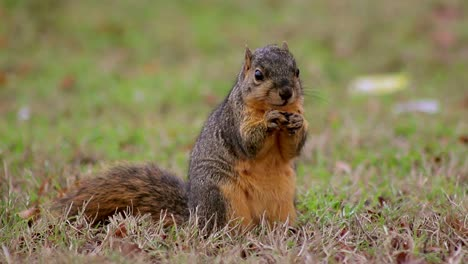Squirrel-Explores-and-Eats-(Medium)