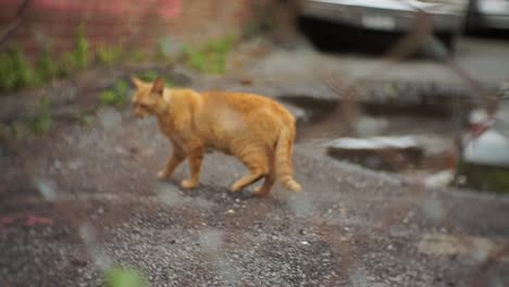 Handheld-Street-Cat