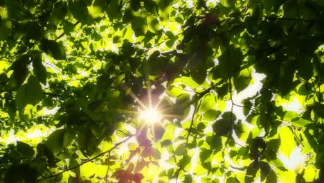 Sun-Through-Leaves