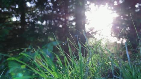 Sunflare-&-Grass
