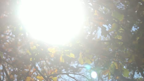 Sunshine-Through-Fall-Leaves-(Dolly)