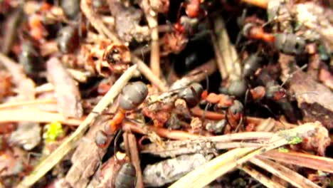Swarm-of-Ants-CC-BY-NatureClip