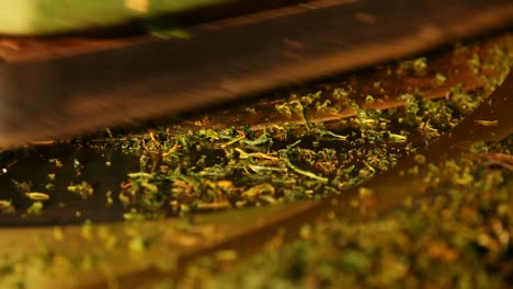 Tea-Manufacture-Rolling
