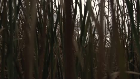 Through-the-Swamp