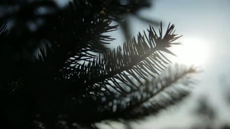 Tree-&-Sun