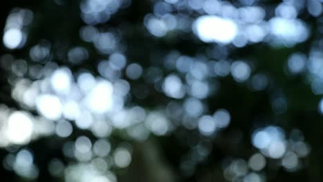 Tree-Bokeh-Background-