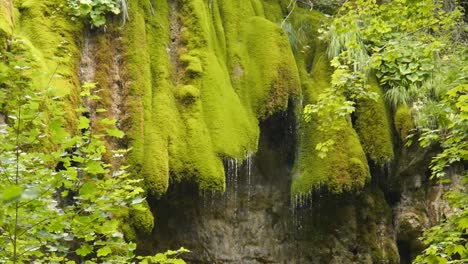 Waterfall-of-Moss