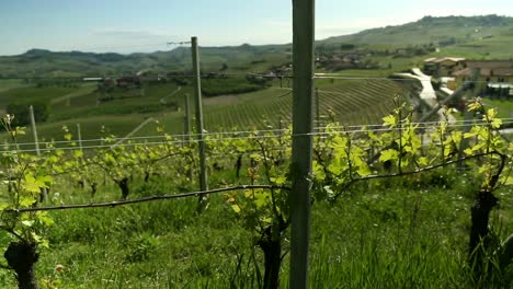 Wine-Country-Pan-2